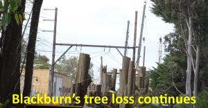 Blackburn's tree loss continues